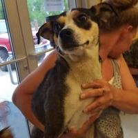 Feist Mix Dog for adoption in Savannah, Tennessee - Gina