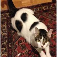 Adopt A Pet :: Baylee - Galveston, TX