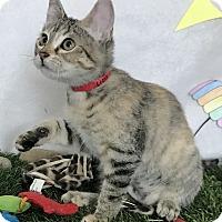 Adopt A Pet :: Liza - Lloydminster, AB