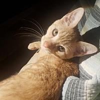 Adopt A Pet :: Tia Maria - Morgantown, WV