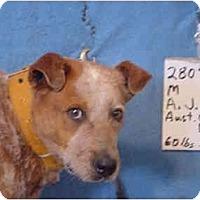 Adopt A Pet :: A. J. / Adopted! - Zanesville, OH