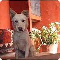Adopt A Pet :: Princesa - Albuquerque, NM