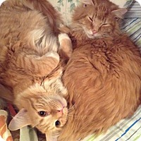 Adopt A Pet :: Colby and Money - Pittstown, NJ