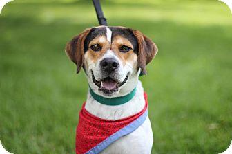 Beagle Mix Dog for adoption in Midland, Michigan - Wayne