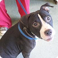 Adopt A Pet :: SERENDIPITY - Cleveland, MS