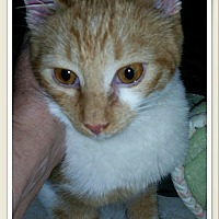 Adopt A Pet :: Andy - MADISON, OH