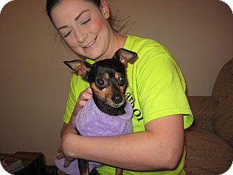Miniature Pinscher/Dachshund Mix Dog for adoption in Port Clinton, Ohio - FRANCIS
