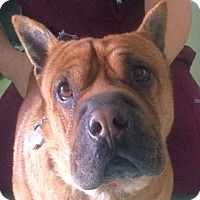 Adopt A Pet :: Myrlie - Barnegat Light, NJ