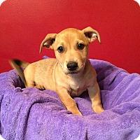 Adopt A Pet :: Cashew - Acworth, GA