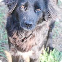 Adopt A Pet :: Aggie - Austin, TX