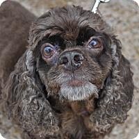 Adopt A Pet :: Prada - Atlanta, GA
