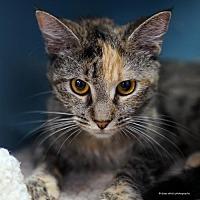 Adopt A Pet :: Ohana - Tucson, AZ