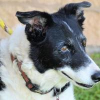 Mixed Breed (Large) Mix Dog for adoption in Georgetown, Texas - Chaser