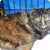 Adopt A Pet :: Jazzy - New Monmouth, NJ