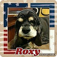 Adopt A Pet :: Roxy - Cape Coral, FL