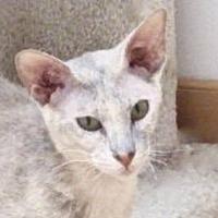 Adopt A Pet :: Katya - Davis, CA
