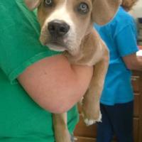 Adopt A Pet :: Courtney Cheyenne - Terre Haute, IN