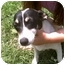 Photo 2 - Jack Russell Terrier Dog for adoption in Ardmore, Tennessee - Miss Wiggles