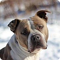 Adopt A Pet :: Latte - Port Washington, NY