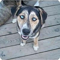 Adopt A Pet :: Miley - Jacksonville, NC