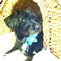 Adopt A Pet :: Cassie - Miami, FL