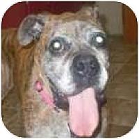 Adopt A Pet :: Otis - North Haven, CT