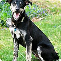 Adopt A Pet :: Baxter!!!!  Rescue Favorite!! - Haverhill, MA