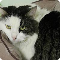 Adopt A Pet :: Puff - Medina, OH
