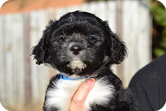 Pinterest - Social Media Litte | Adopted Puppy | foster