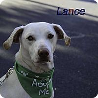 Adopt A Pet :: Lance - Alpharetta, GA