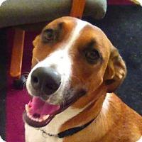 Adopt A Pet :: Chacha - I love cats & Goats!! - El Cajon, CA