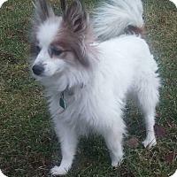 Adopt A Pet :: Furry - Paris, IL