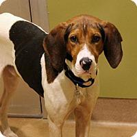 Adopt A Pet :: Traveler - Chicago, IL