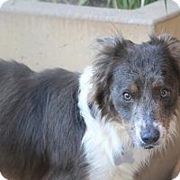 Adopt A Pet :: Everheart - Woonsocket, RI
