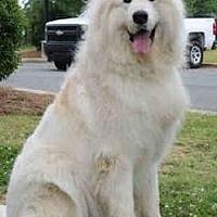 Adopt A Pet :: Kane - Claremont, NC