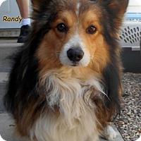 Adopt A Pet :: Randy - Oskaloosa, IA