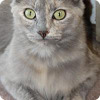 Adopt A Pet :: Lilo - Savannah, MO