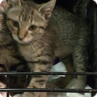 Adopt A Pet :: Miller - East Brunswick, NJ