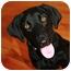 Photo 1 - Labrador Retriever Mix Dog for adoption in kennebunkport, Maine - Lily - Pending!