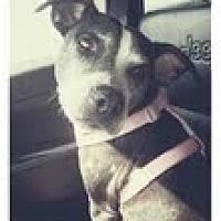 Adopt A Pet :: Indy - Rowlett, TX