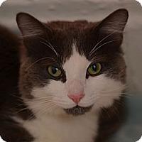 Adopt A Pet :: Andy K. (or K. Andy) - Brooklyn, NY