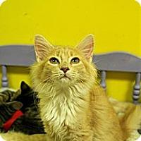Adopt A Pet :: Foxy - Mobile, AL