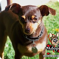 Adopt A Pet :: Lolita - Huntington Beach, CA
