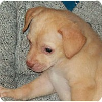 Adopt A Pet :: AVA - Southport, NC