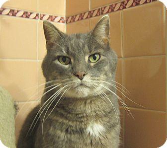 Domestic Shorthair Cat for adoption in Roseville, Minnesota - Oscar