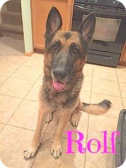 German Shepherd Dog Mix Dog for adoption in Scottsdale, Arizona - Rolf