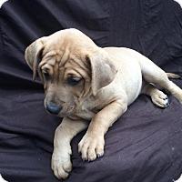 Adopt A Pet :: Gia - East Sparta, OH