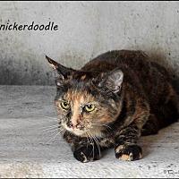 Adopt A Pet :: Snickerdoodle - Trexlertown, PA
