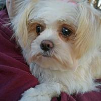 Adopt A Pet :: Jill - Lutherville, MD