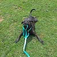 Adopt A Pet :: Dalton - Bedminster, NJ